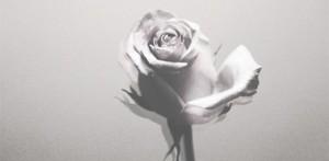 silver-rose-slide